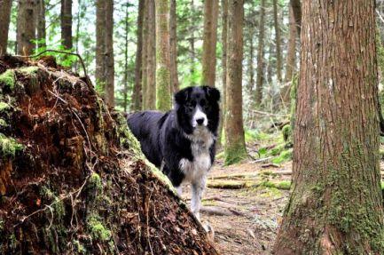 Mia in Trees - Hicks Lake