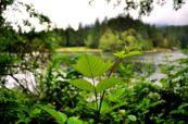 New green - Hicks Lake