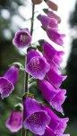 Wood Lake wild flowers